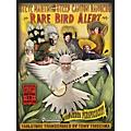 Homespun Steve Martin Rare Bird Alert Tablature Book